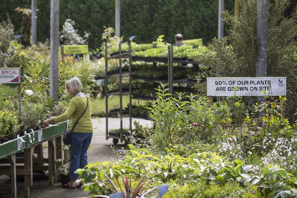 Trevena Cross plants fed with Trevena Cross Fertiliser