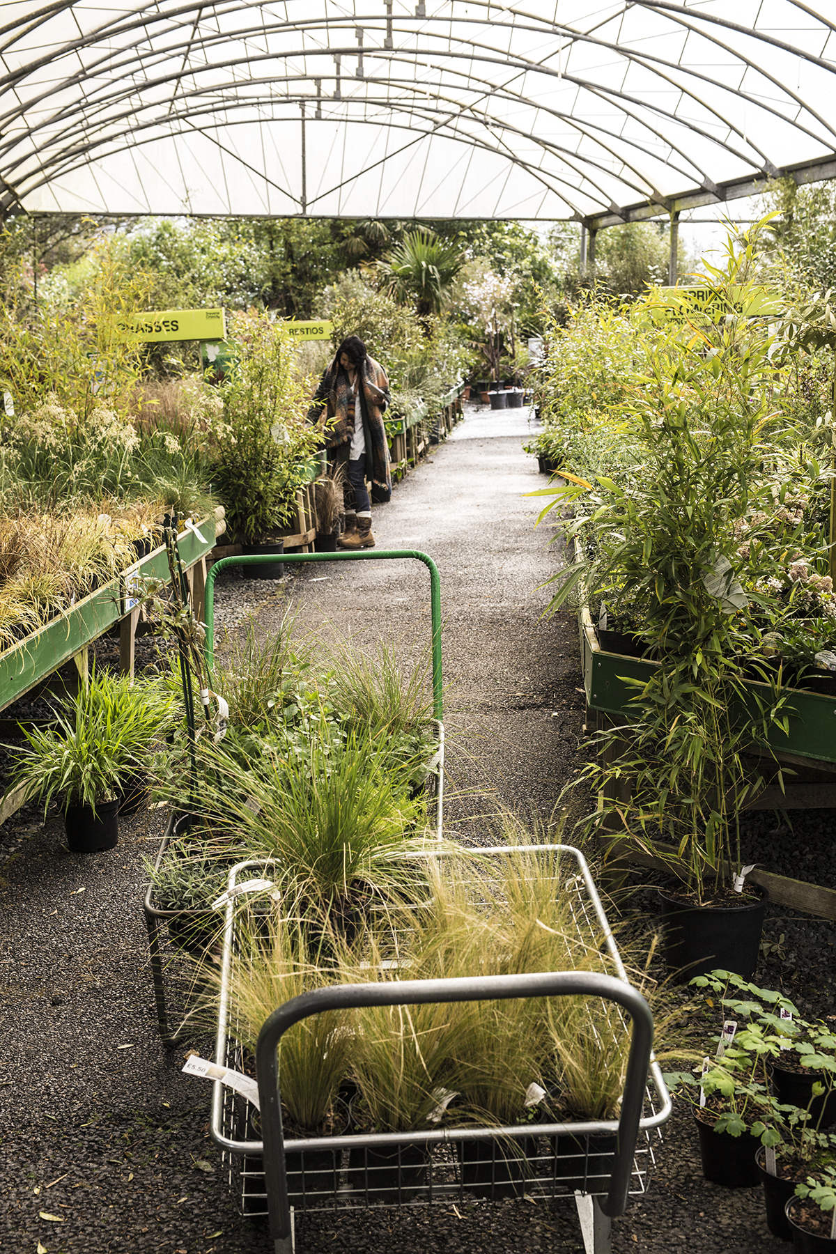 Trevena Cross plants on benches and in trolley