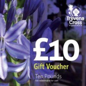 Gift Voucher(s) £10