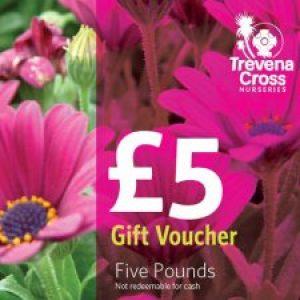 Gift Voucher(s) £5