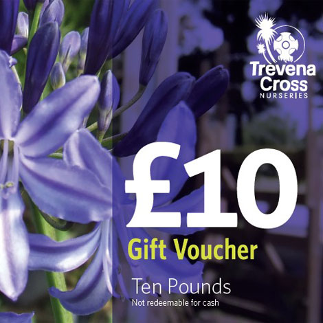 10 pound Trevena Cross Gift Voucher
