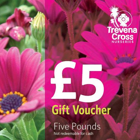 5 pound Trevena Cross gift voucher