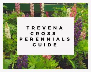 Trevena Cross Perennials Guide