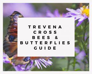 Trevena Cross Bees & Butterflies Guide