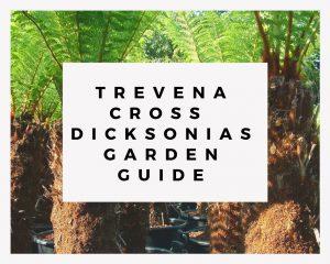 Trevena Cross Dicksonias Garden Guide