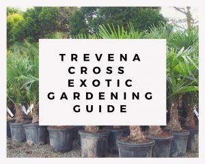 Trevena Cross Exotic Gardening Guide