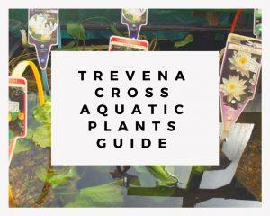 Trevena Cross Aquatic Plants Guide
