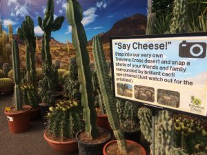 Say cheese - cacti photo opportunity