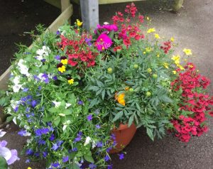 Large pot of colourful patio and bedding plants