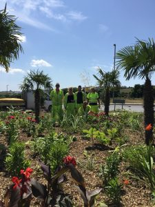 team planting the roundabout
