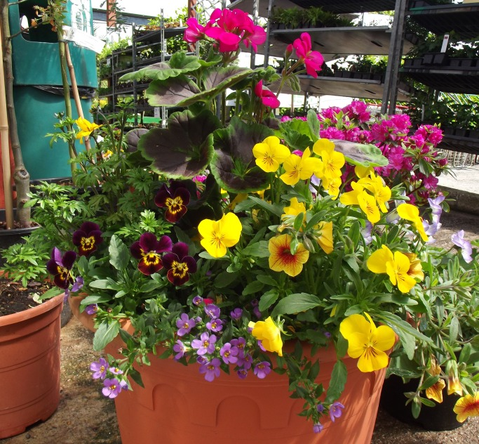summer planter in terracotta pot