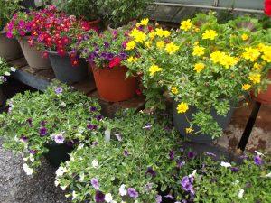 Flowering pot displays