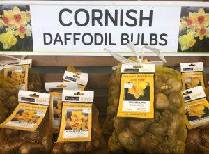 Cornish Bulbs at Trevena Cross