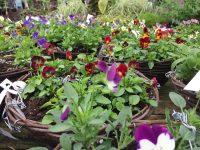 autumn bedding plant basket