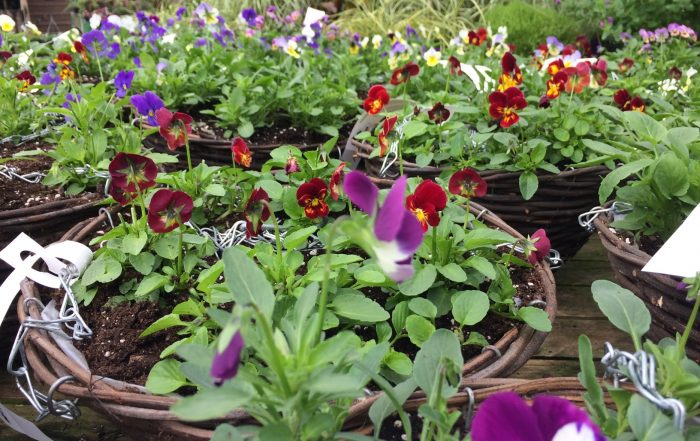 autumn bedding plant basket