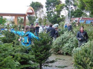 Trevena Cross Christmas Trees