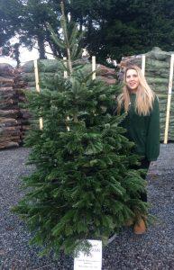 Nordmann Fir £35 premium tree