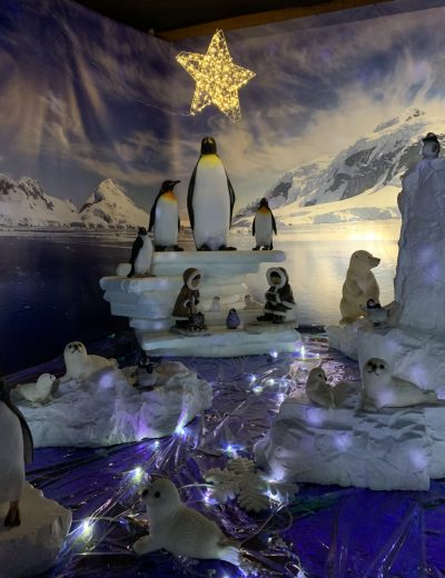 Penguins in Trevena Cross grotto 2018