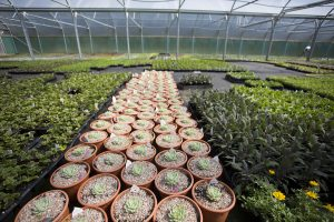 plants in Trevena Cross nursery