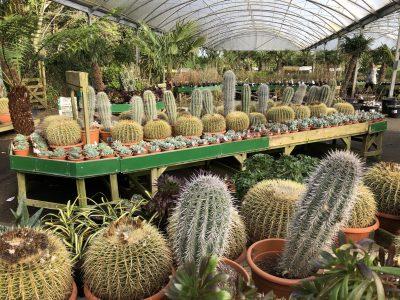 Cacti Display 2019