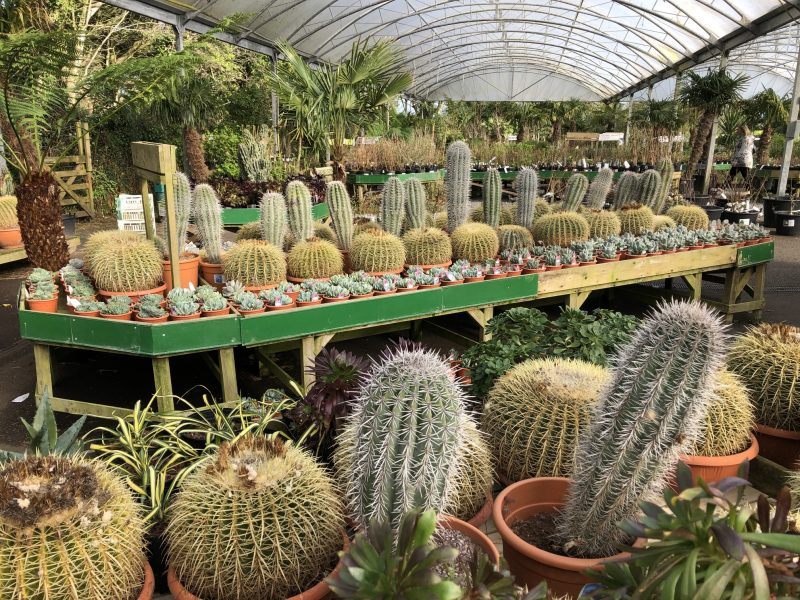 Cacti Display 2019