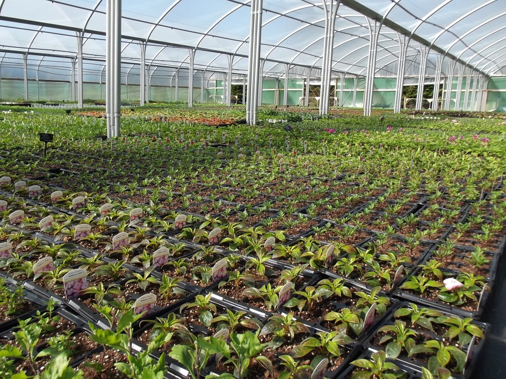 Bedding tunnel in Trevena Cross Nursery