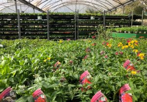 bedding and patio plants