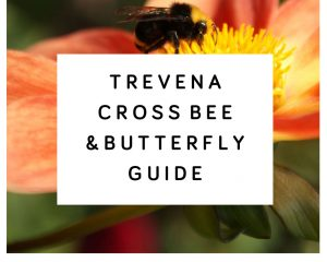 Trevena Cross Bee & Butterfly Guide
