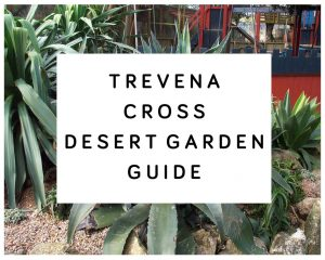 Trevena Cross Desert Garden Guide
