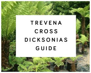 Trevena Cross Dicksonias Guide