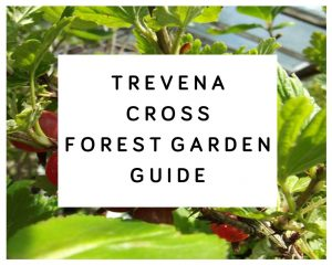 Trevena Cross Forest Garden Guide