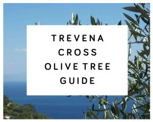 Trevena Cross Olive Tree Guide