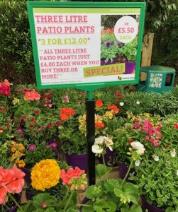Three litre patio plants 3 for £12