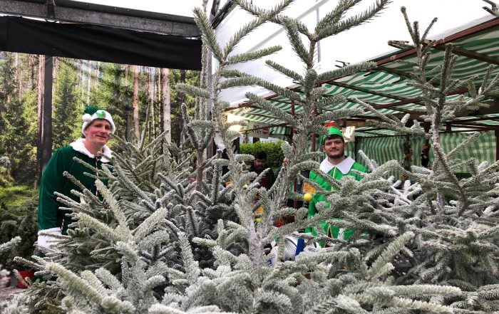 Christmas tree forest with elves - Trevena Cross