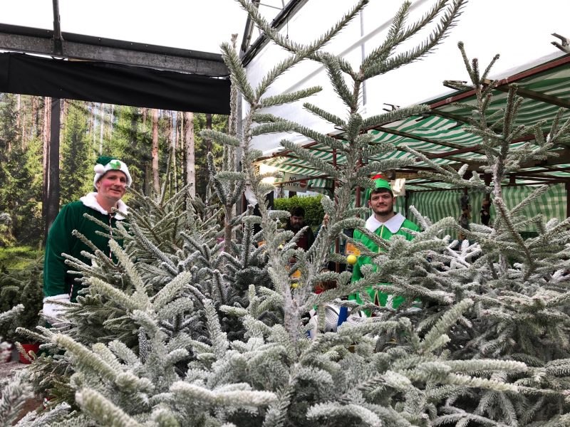 Christmas tree forest with elves - Trevena Cross