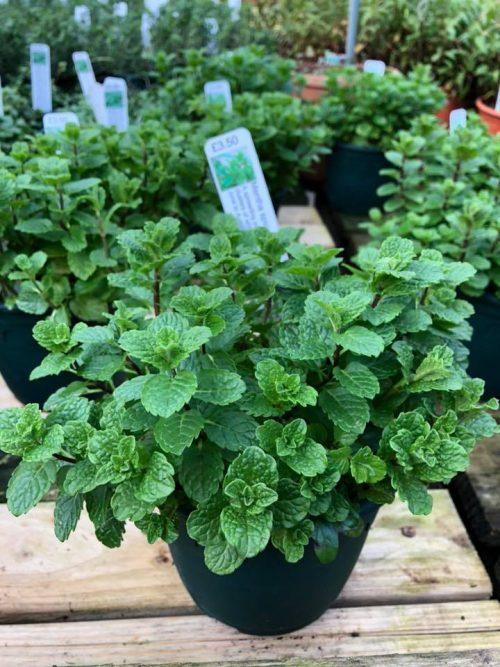 1ltr 3.50 herbs - Trevena Cross