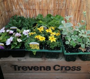 Bedding and Patio selection at Trevena Cross