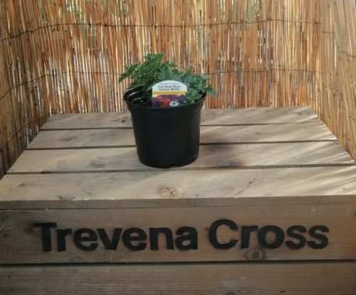 Trio Pot at Trevena Cross