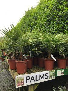 Palms at Trevena Cross