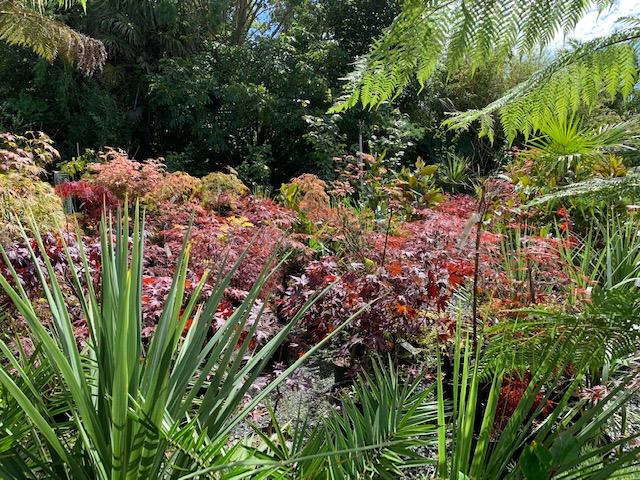 Plants at Trevena Cross Nurseries