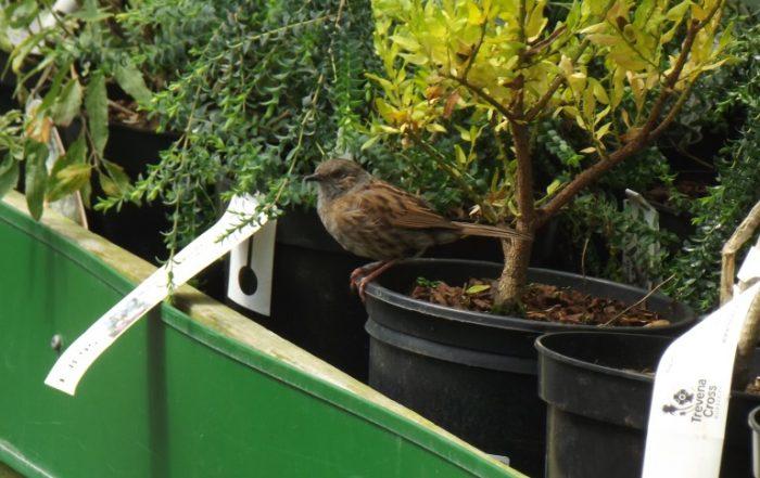 Bird at Trevena Cross