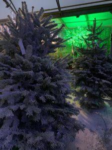 Snowy trees in the dark Snowy Christmas tree - Singing reindeer - Christmas at Trevena Cross