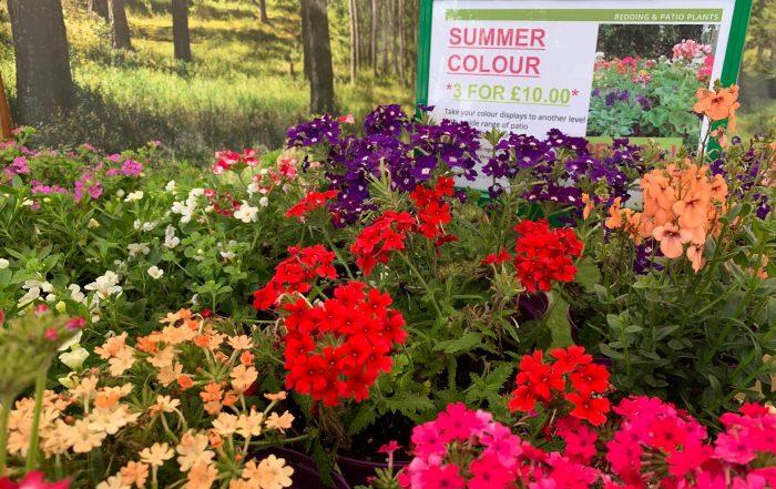 Summer colour at Trevena Cross