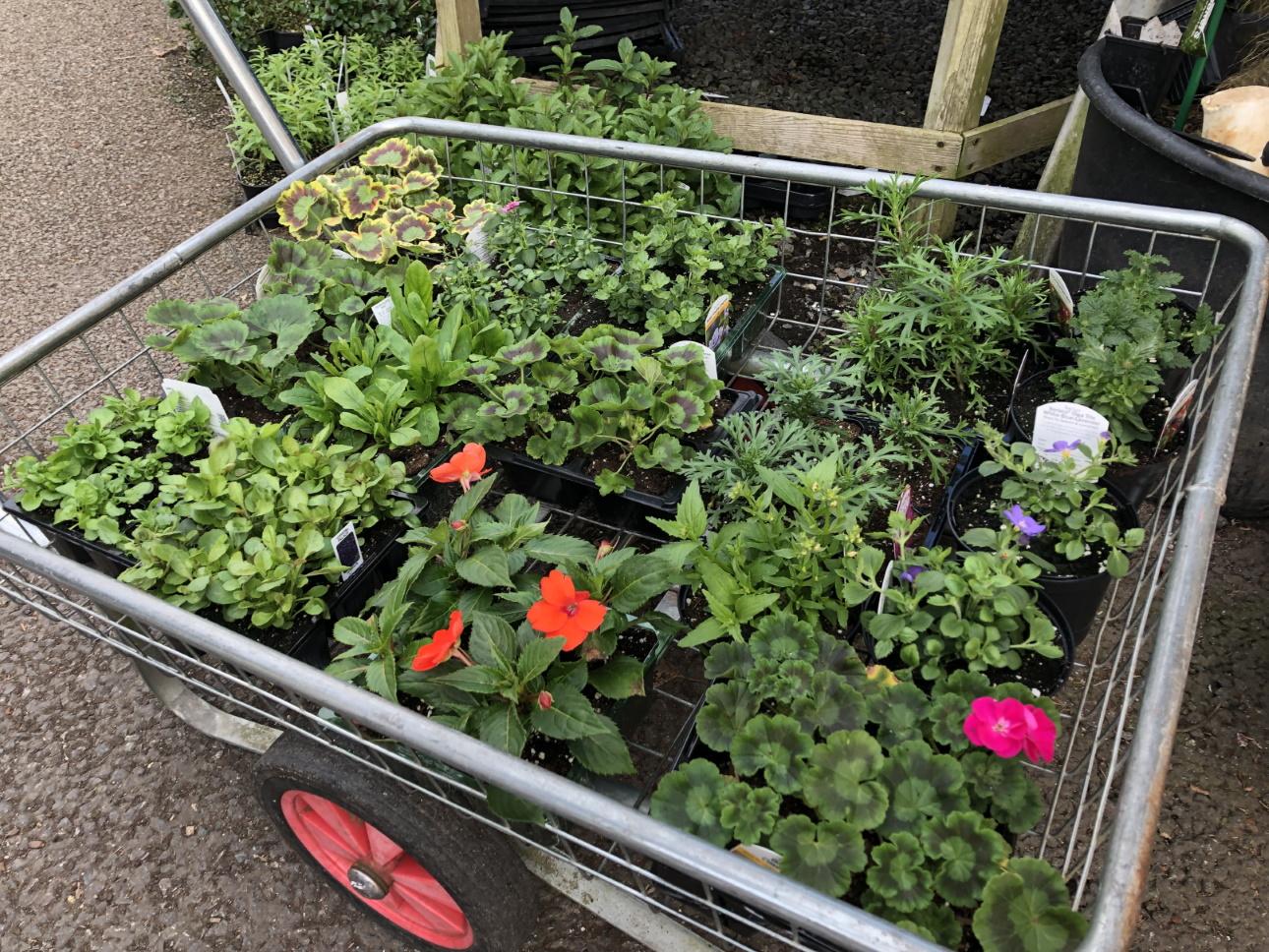 Trolley of bedding plants - Trevena Cross