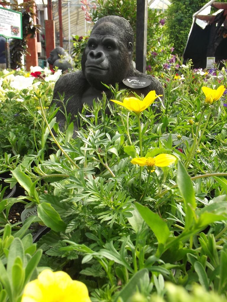 Gorilla amongst flowers at Trevena Cross