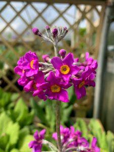 Perennial at Trevena Cross