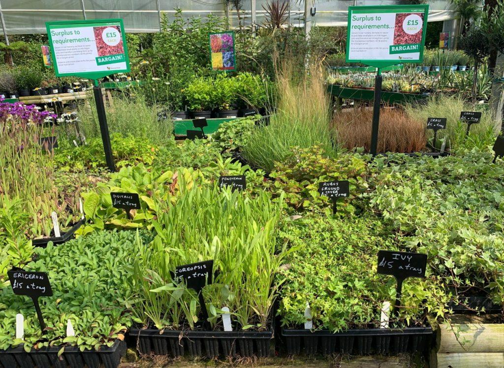 Tray of small plants £15 at Trevena Cross